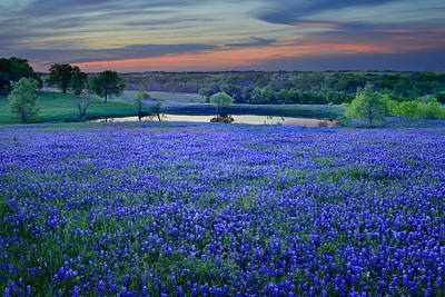 Floral Photograph - Bluebonnet Lake Vista Texas Sunset - Wildflowers Landscape Flowers Pond by Jon Holiday