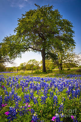 Nature Scene Photograph - Bluebonnet Meadow by Inge Johnsson