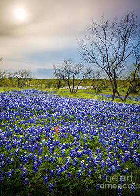 Pasture Scenes Photograph - Bluebonnet Mood by Inge Johnsson