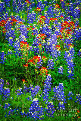 Paintbrush Photograph - Bluebonnet Patch by Inge Johnsson