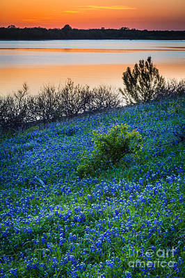 Grapevine Lake Bluebonnets Print by Inge Johnsson