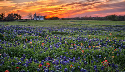 Photograph - Bluebonnet Sunset by Chris Multop
