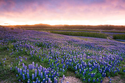 Texas Bluebonnet Wildflowers Landscape Flowers Spring Photograph - Bluebonnets After The Storm - Wildflower Field In Texas by Ellie Teramoto