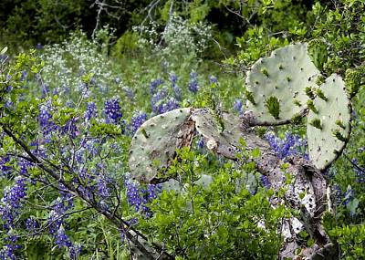 Bluebonnets And Cactus Art Print by Ron Grafe