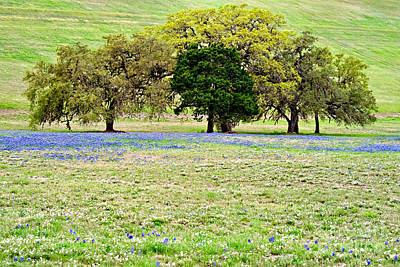 Water Droplets Sharon Johnstone - Bluebonnets and Oaks by Gary Richards