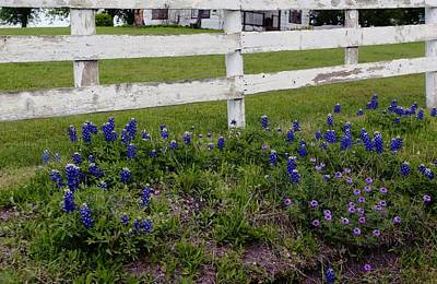 Digital Art - Bluebonnets And The White Country Fence by Carrie OBrien Sibley