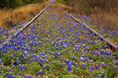 Train Tracks Photograph - Bluebonnets And Train Tracks by Paul Huchton