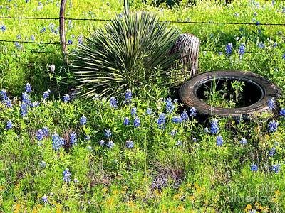 Photograph - Bluebonnets In Tire by Linda Cox