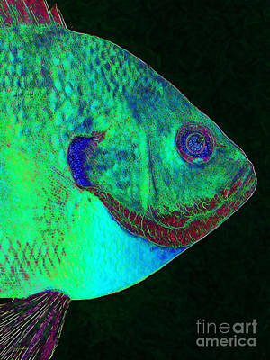 Bluegill Photograph - Bluegill Fish P128 by Wingsdomain Art and Photography