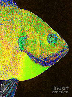Bluegill Photograph - Bluegill Fish P28 by Wingsdomain Art and Photography