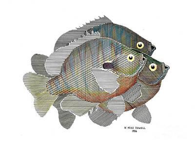 Bluegill Trio Art Print