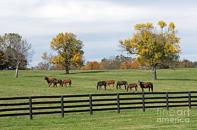 Kentucky Horse Park Painting - Bluegrass Autumn by Roger Potts