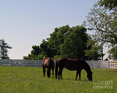 Kentucky Horse Park Painting - Bluegrass Summer Day by Roger Potts