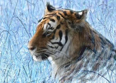 Bluegrass Tiger Art Print