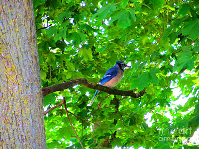 Namaste With Pixels Royalty Free Images - Bluejay in Springtime Royalty-Free Image by Tina M Wenger