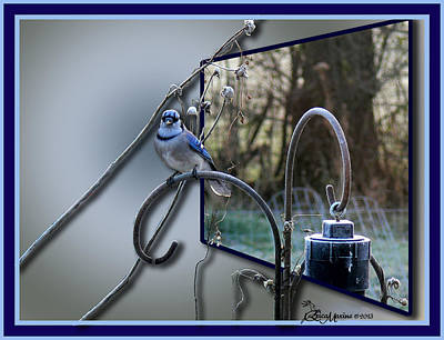 Photograph - Bluejay Oob - Featured In 'out Of Frame' And Comfortable Art Groups by Ericamaxine Price