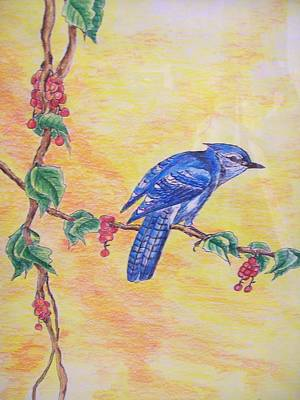 Bluejay Drawing - Bluejay by Tom Rechsteiner