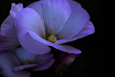 Art Print featuring the photograph Bluepink by Ivete Basso Photography