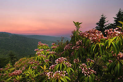 Blueridge Parkway Mountain Laurel Art Print by Randall Branham