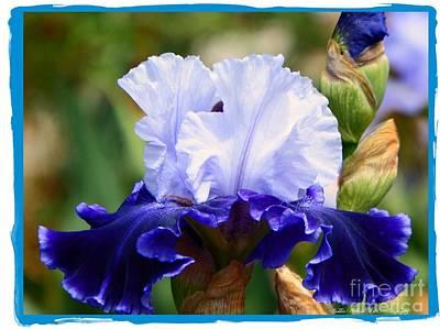 Photograph - Blues  by Bobbee Rickard