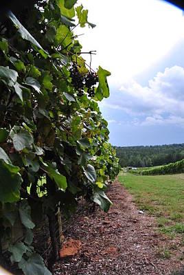 Blues From A Thundercloud Vineyard Original