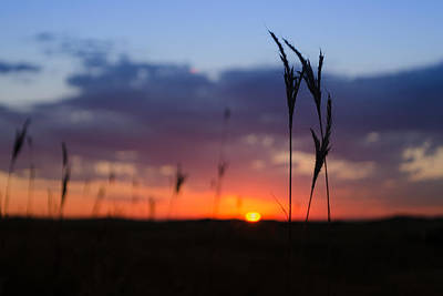 Photograph - Bluestem Morning by Dakota Light Photography By Dakota