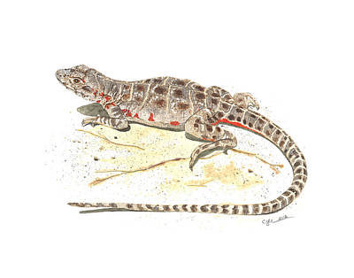 Painting - Blunt-nosed Leopard Lizard  by Cindy Hitchcock