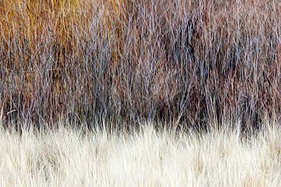 Winter Landscapes Photograph - Blurred Brown Winter Woodland Background by Elena Elisseeva