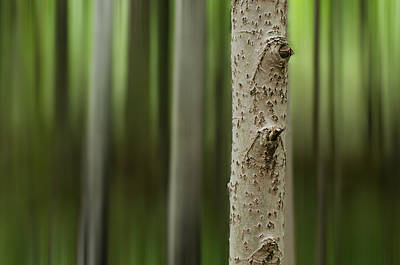 Sweden Photograph - Blurry Nature by Marco Calandra