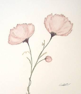 Drawing - Blush Peonies by Christine Corretti