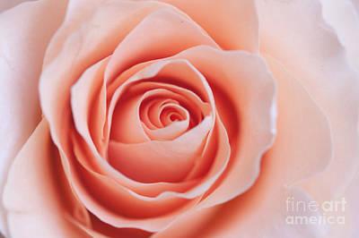 Photograph - Blush Rose by Ana V Ramirez