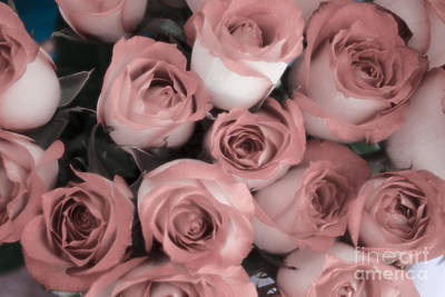 Photograph - Blush Roses by Jim And Emily Bush
