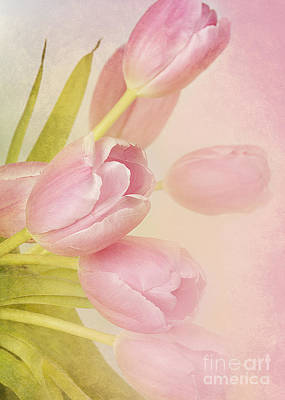 Blushing Beauties Print by A New Focus Photography