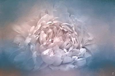 Photograph - Blushing Blue And Cream Peony - Floral by Jai Johnson