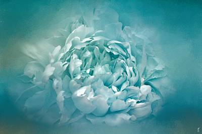 Photograph - Blushing Caribbean Waters Peony - Floral by Jai Johnson