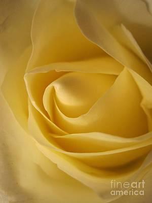 Photograph - Blushing Cream Rose 7 by Tara  Shalton