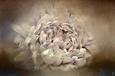Photograph - Blushing Dutch White Peony - Floral by Jai Johnson