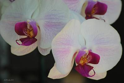 Photograph - Blushing Orchids by Susan Stevens Crosby