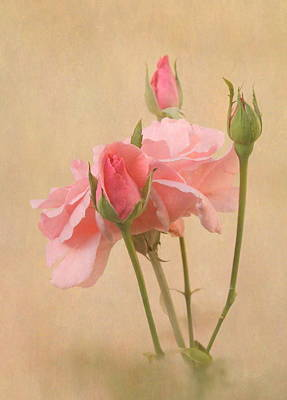 Blushing Pink Art Print by Angie Vogel