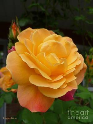 Prickly Rose Photograph - Blushing Rosalina by Lingfai Leung
