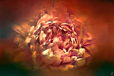 Photograph - Blushing Rusted Flame Peony - Floral by Jai Johnson