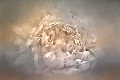 Photograph - Blushing Silver And Gold Peony - Floral by Jai Johnson