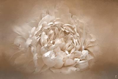 Photograph - Blushing Tan Peony - Floral by Jai Johnson