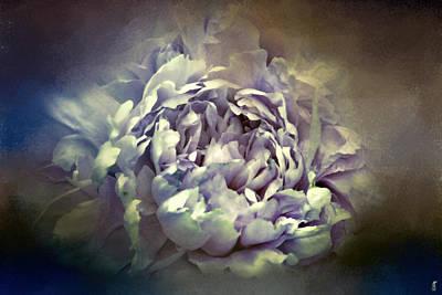 Photograph - Blushing Vintage Lavender Peony - Floral  by Jai Johnson