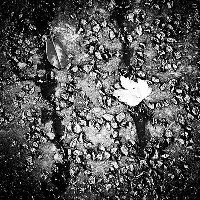 Creative Photograph - Leaves In The Wet Black 'n' White by Jason Michael Roust