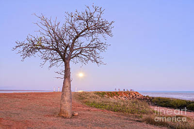 Boab Tree And Moonrise At Broome Western Australia Art Print