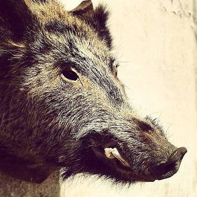Food And Beverage Wall Art - Photograph - Boar! by Emanuela Carratoni