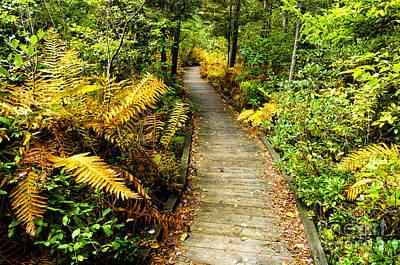 Priska Wettstein Land Shapes Series - Boardwalk Cranberry Glades Botanical Area by Thomas R Fletcher