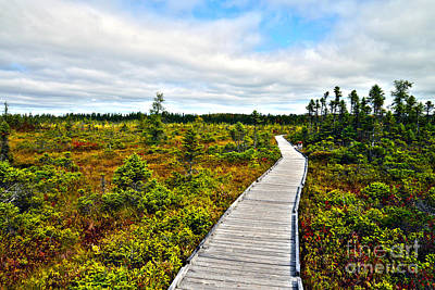 Photograph - Orono Boardwalk by Glenn Gordon