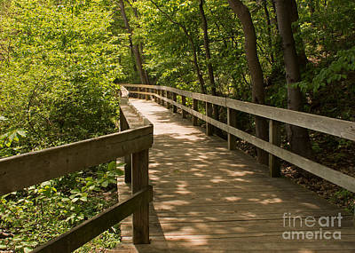 Photograph - Boardwalk In Summer Woods by Barbara McMahon